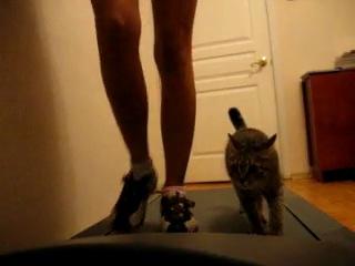 Кошка на беговой дорожке с хозяйкой